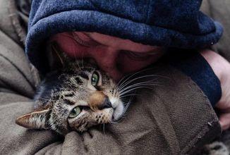 Nový dokument Cat Daddies se vás pokusí přesvědčit o tom, že na muži, který doma chová kočky, není nic divného