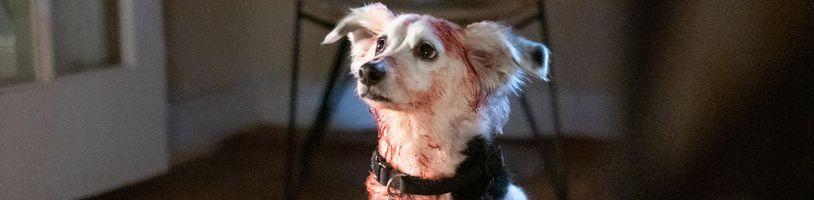 Hororová antológia Into the Dark predstavuje psa, ktorý eliminuje všetok stres... vraždou
